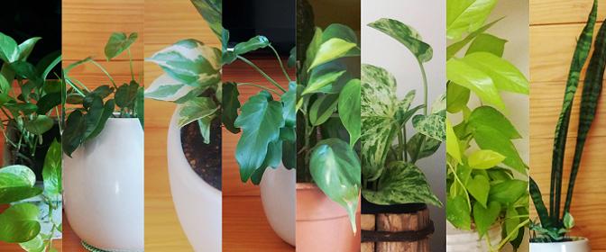 Adoro plantas, mas moro em apartamento. E agora?