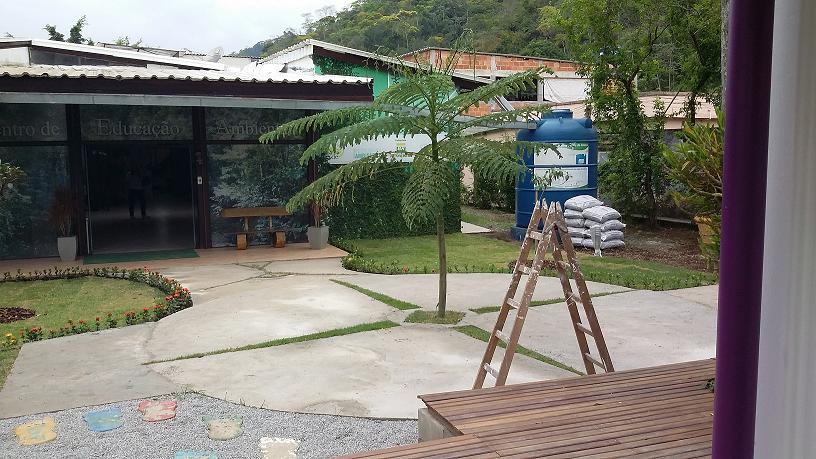 Guapuruvu recém plantado no terreno da Onda Verde